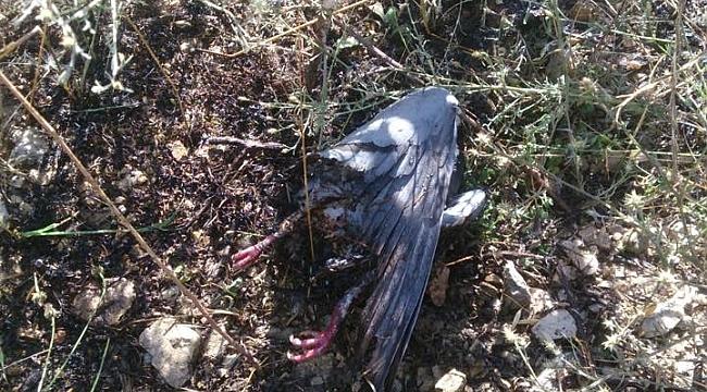 Elektrik Tellerine Çarpan Kuş, Anız Yangınına Neden Oldu