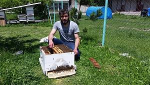 Kovandan çıkan arı kolonisi ağaçta toplandı
