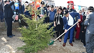 67 bin 700 ağaç dikildi